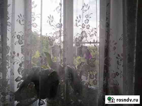 1-комнатная квартира, 37 м², 2/2 эт. Гаврилов Посад
